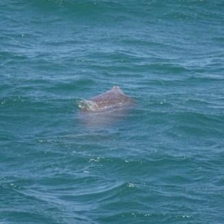 Dugong holt Luft