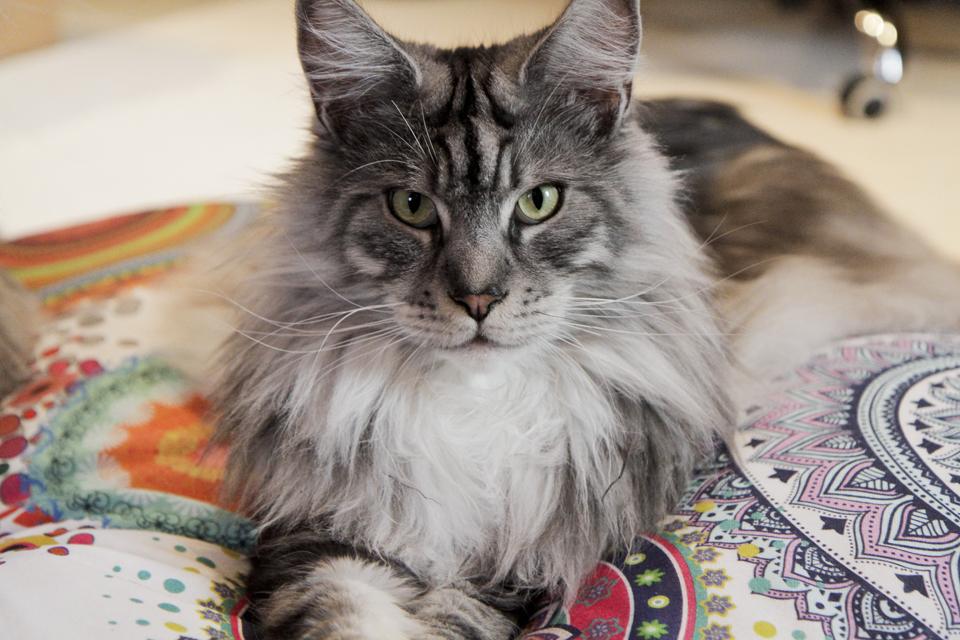 Kissen für große Katzen Qushin