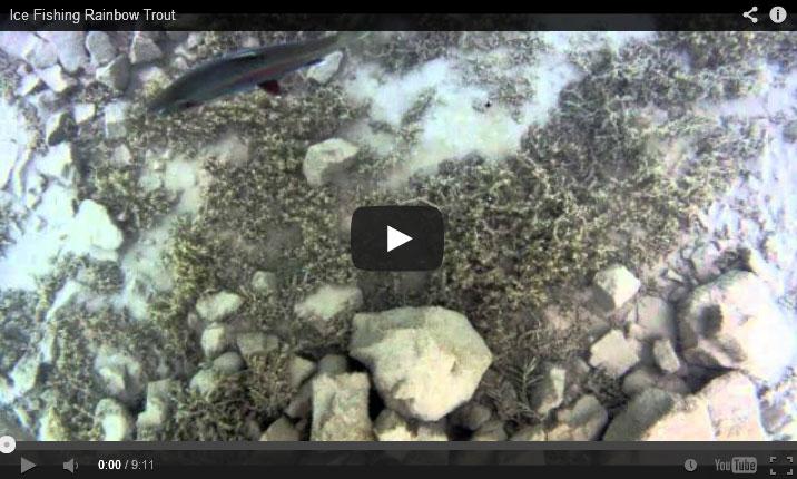 ice fishing Rainbow Trout