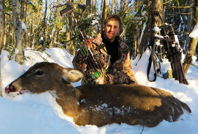 archery whitetail deer