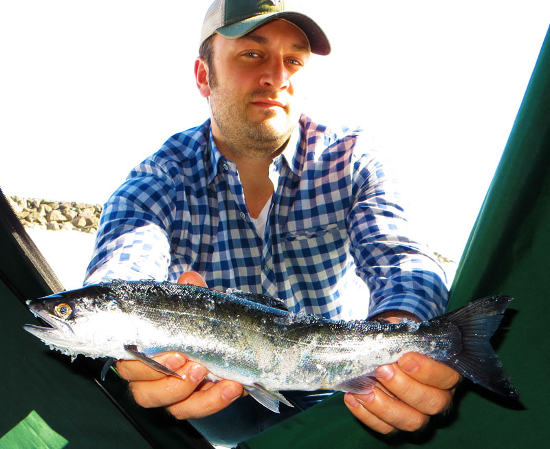 Lake Superior Coho Salmon