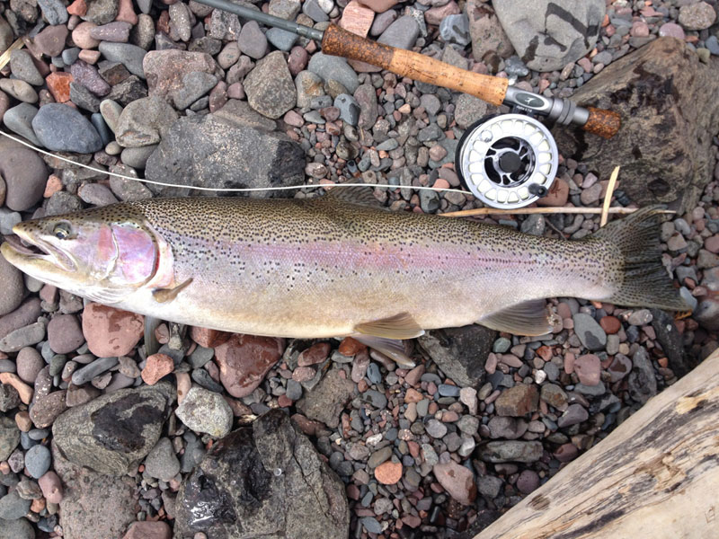 Fly Fishing Rainbow Trout in Lake Superior