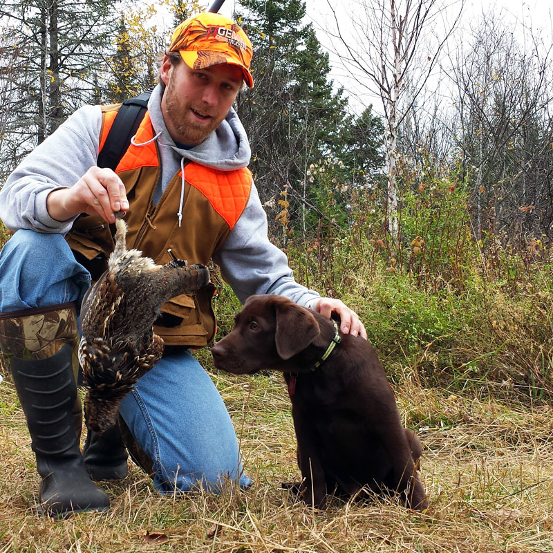 Grouse Hunting with Chocolate Lab