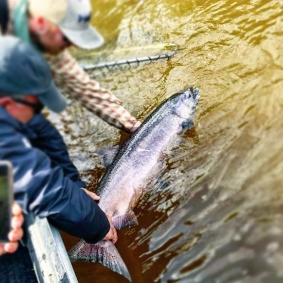Deshka River King Salmon