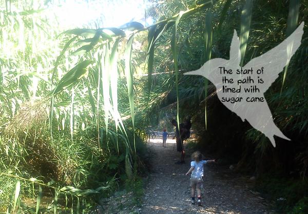 Rio Chillar sugar cane