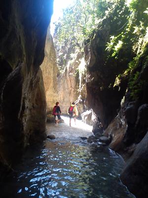 Rio Chillar cachorros