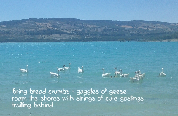 bermejales-geese