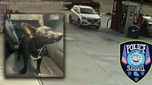 coppia-getta-dall'auto-in-corsa-sei-cani 2