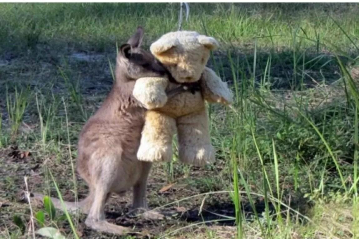 The Doodlebug kangaroo hugs his teddy bear