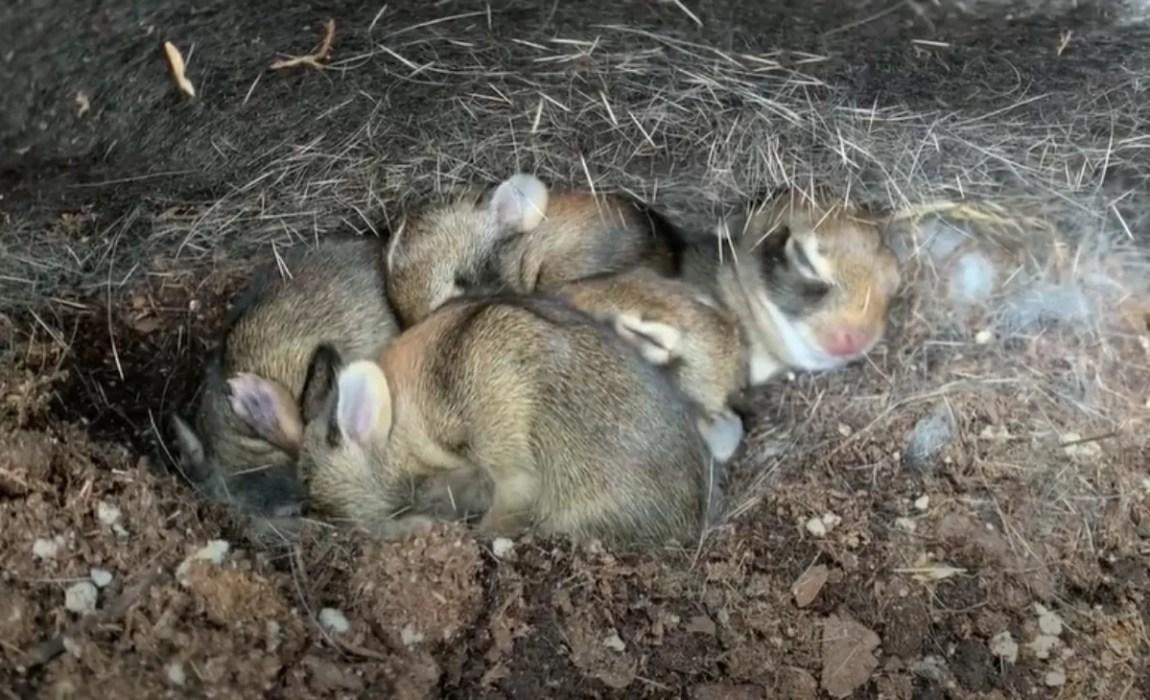 Bunnies found in a nursery