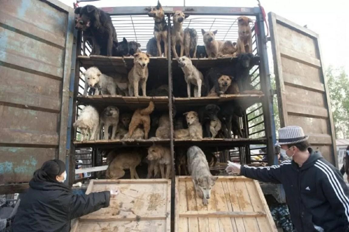 2021 Dog Meat Festival