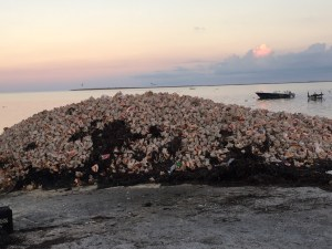Giant Conch Shell Pile