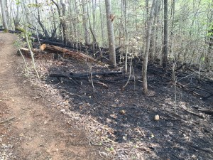Charred Forest
