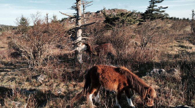 AT Thru-Hike #34 – The Magical Wild Pony Mystery Tour