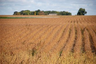 fall soybeans