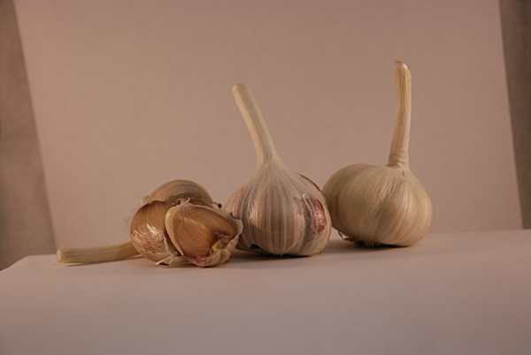 belarus culinary garlic
