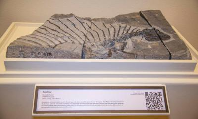 Fossil of plant-eating reptile discovered in New Mexico