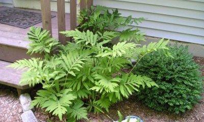 plants at Tennessee Nursery