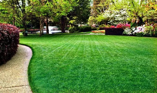 process to create a beautiful green lawn
