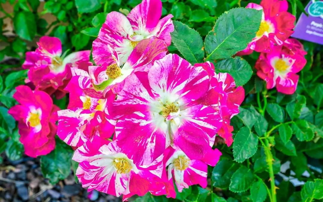 Flower Fertilizers