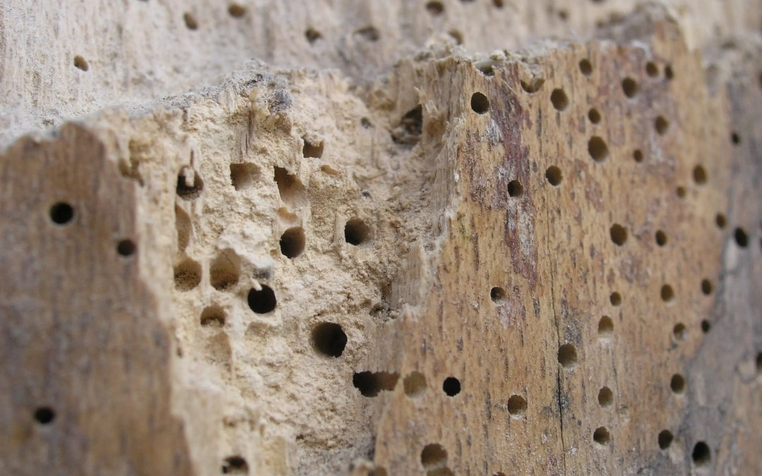Solutions For Wood Borer Insects of Trees & Shrubs