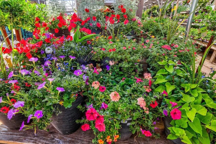 best fertilizer for flowers