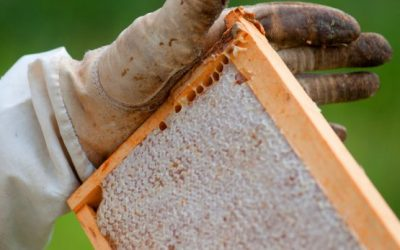 De Bijenbaas honingoogst is binnen!