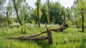 Bijenbaas locatie Purmerend – Provincie Noord-Holland