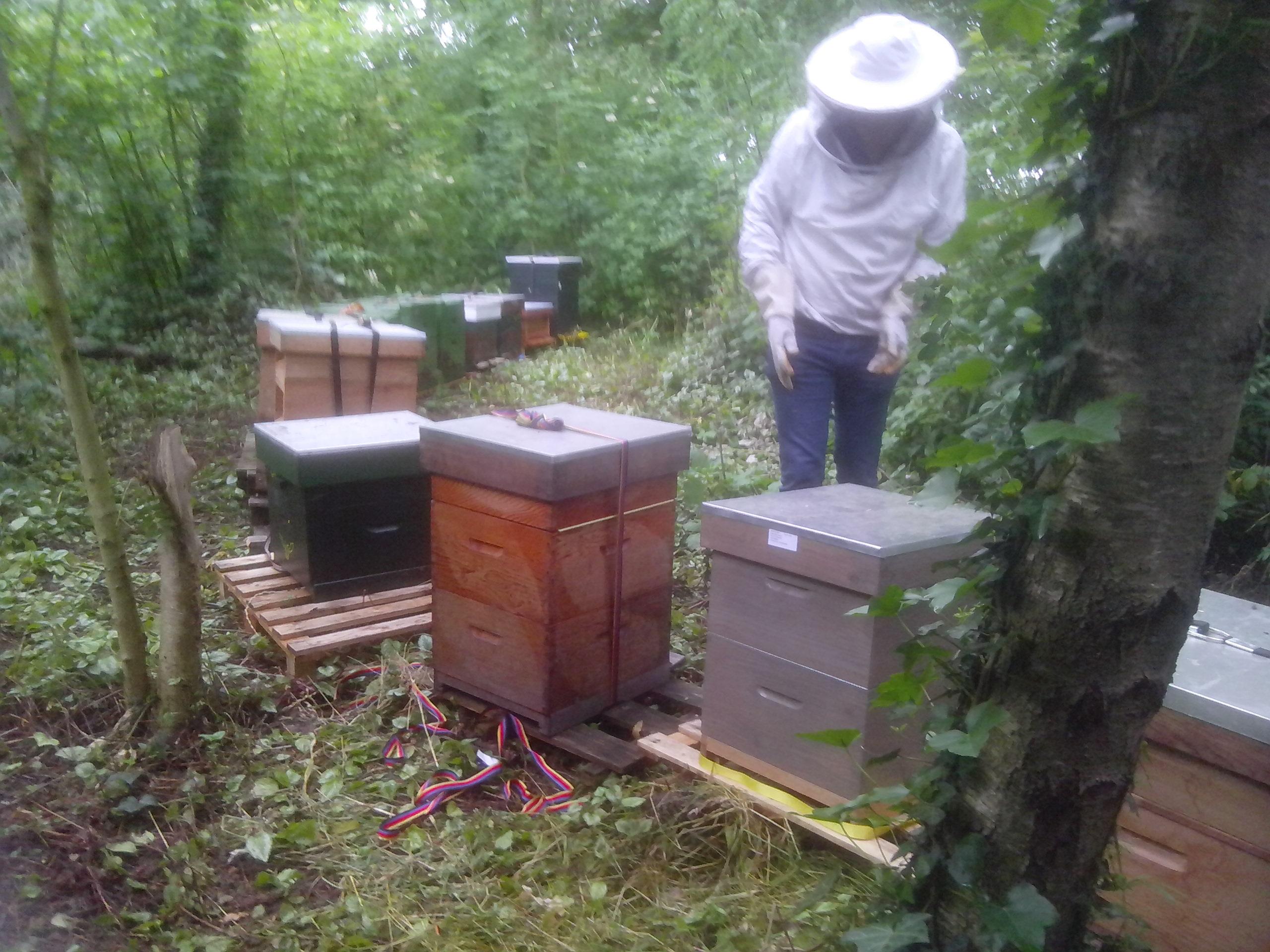 Bijen naar Alphen juni 2015