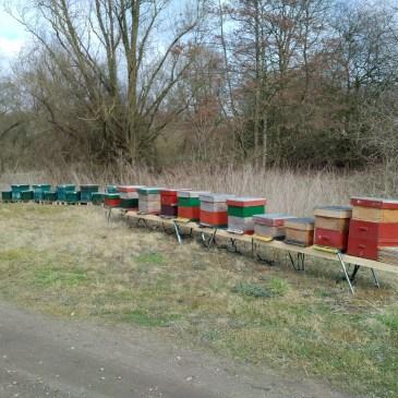 Bijen naar de Wilg 2016