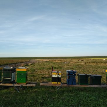 Bennekomse bijen in Zeeland