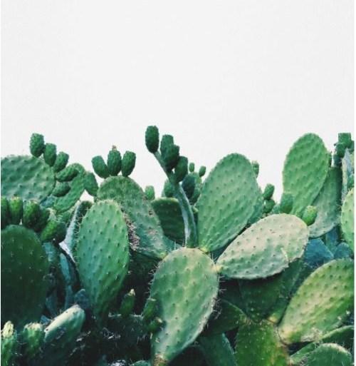 cactus 7bis nouveauté produit