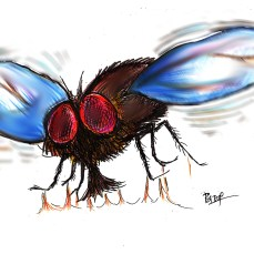 The fly that sucked