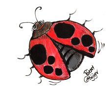 The ladybird who hitchhiked