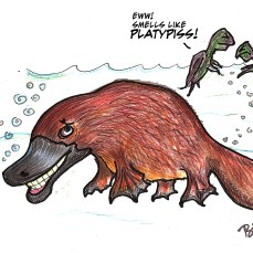 When a platypus pees