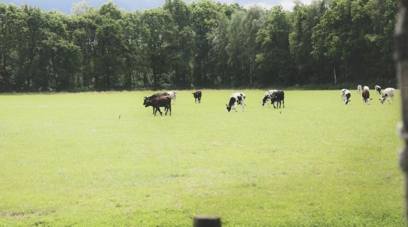 Bijzondere Overnachting Origineel Overnachten Slapen op boerderij De Lange Weide BoerenBed in Dwingeloo15
