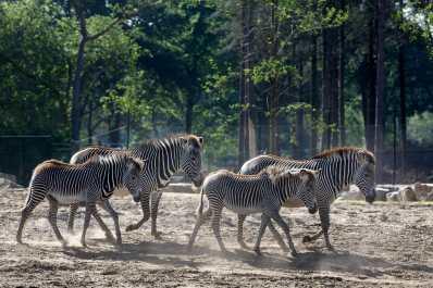 Bijzondere Overnachting Safaripark Resort De Beekse Bergen Hilvarenbeek Brabant1