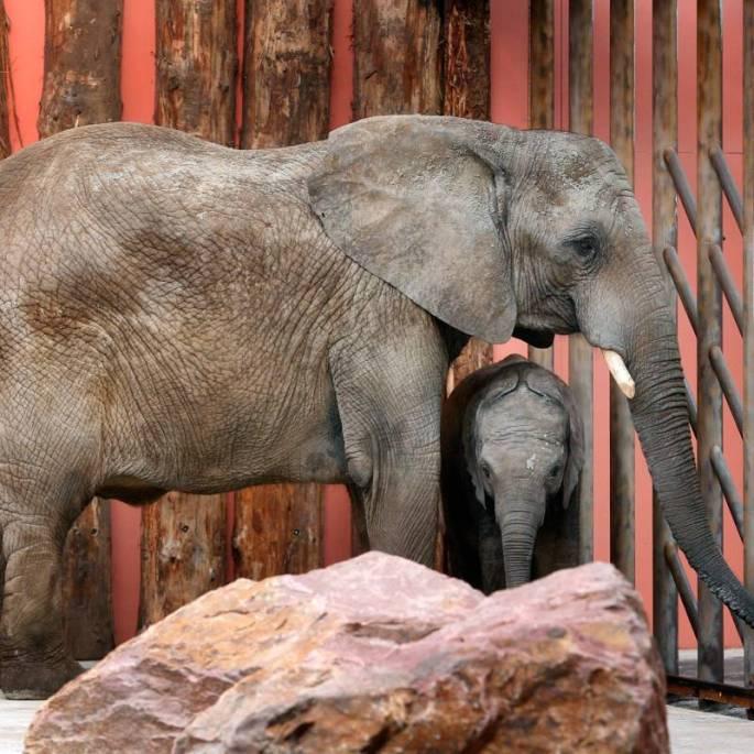 Bijzondere Overnachting Safaripark Resort De Beekse Bergen Hilvarenbeek Brabant15