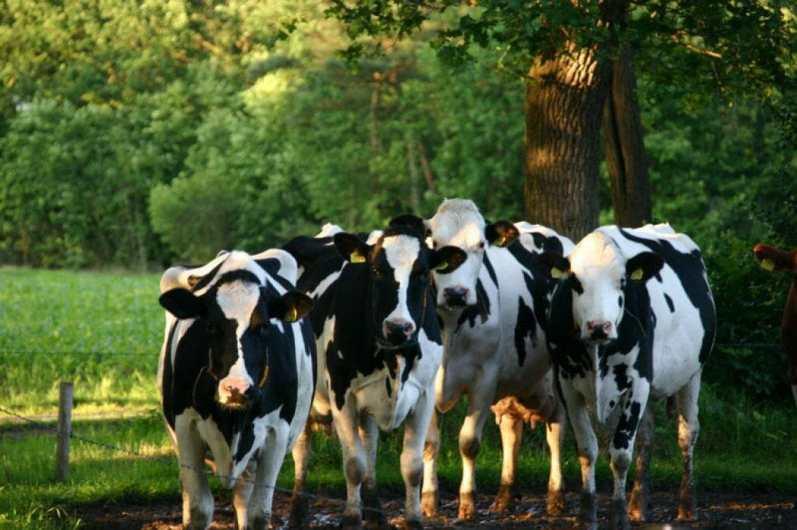 Bijzondere Overnachting Slapen bij de Boer Landgoed Volenbeek Ermelo de Veluwe12