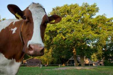 Bijzondere Overnachting Slapen bij de Boer Landgoed Volenbeek Ermelo de Veluwe21