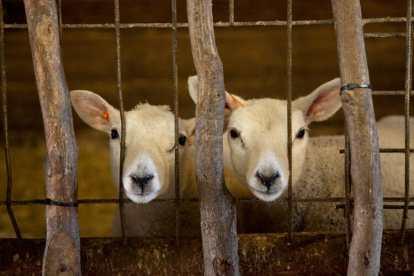 Bijzondere Overnachting Slapen bij de Boer Landgoed Volenbeek Ermelo de Veluwe22