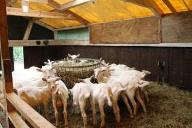 Bijzondere Overnachting Slapen bij de Boer op De Groene Hoeve Wijdenes boerderij Noord-Holland15