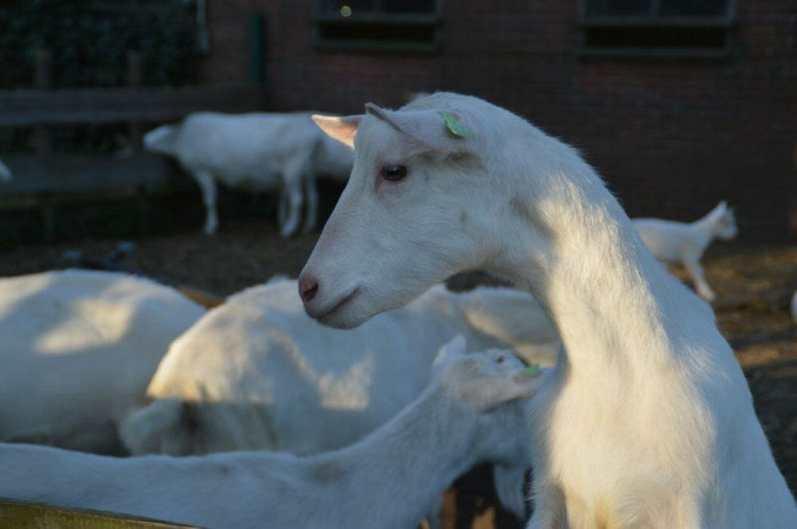 Bijzondere Overnachting Slapen bij de Boer op De Groene Hoeve Wijdenes boerderij Noord-Holland7