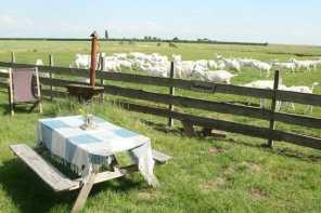 Bijzondere Overnachting Slapen bij de Boer op De Groene Hoeve Wijdenes boerderij Noord-Holland9