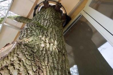 Bijzondere Overnachting Slapen in een boomhut Buytenplaets Suydersee9