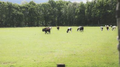 Bijzondere Overnachting Origineel Overnachten Slapen op een boerderij de Jobinghoeve in Grolloo met knuffelschuur in Drenthe16
