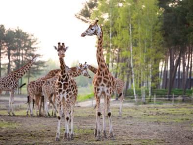 75 euro kortingscode Safari Resort Beekse Bergen5