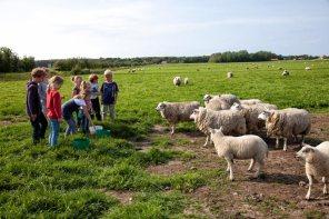 Bijzondere Overnachting Origineel Overnachten BoerenBed Slapen bij de Boer op schapenboerderij Texel7