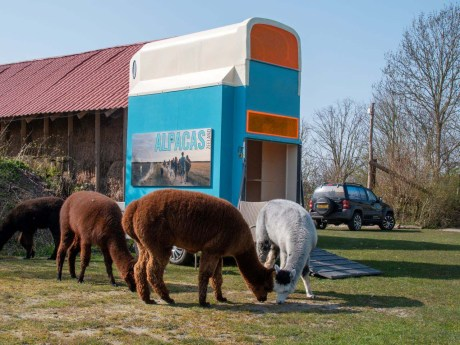 Slapen in Alpacas on Wheelzzz aan de Zeeuwse kust