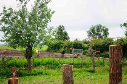Glamping aan de Waterspiegel slapen met alpacas in Zeeland de Schuilstal 5